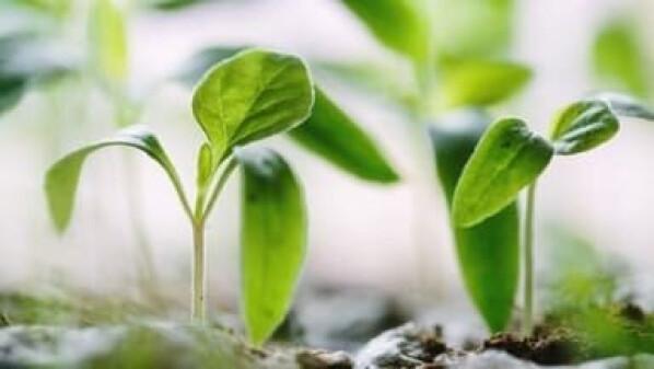 Регуляторы роста